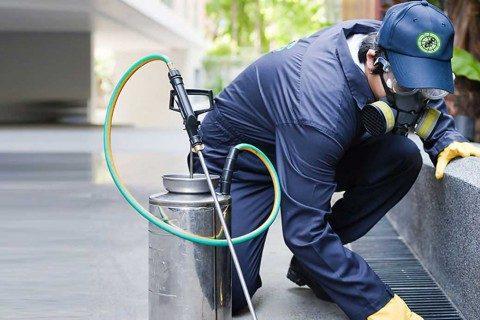 Tips To Find The Best Pest Specialist For Your Home